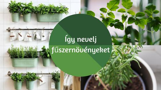 Így nevelj fűszernövényeket a konyhádban