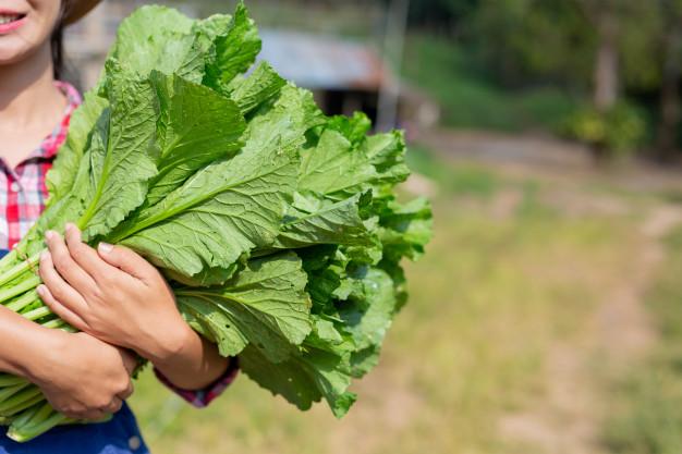 10 salátaötlet, ha valami gyorsra és egészségesre vágysz