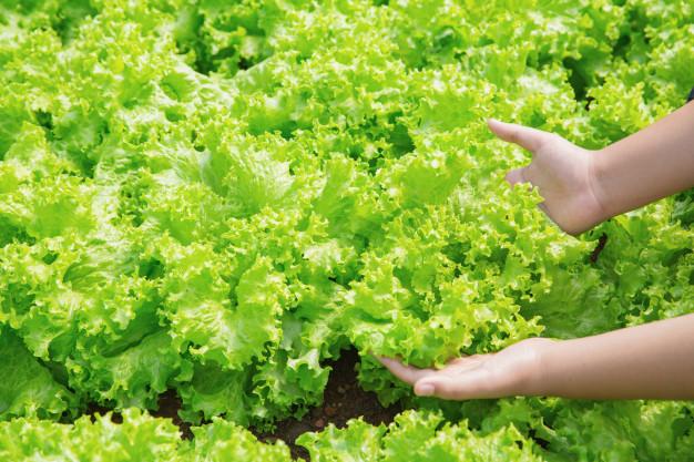 10 zöld leveles, amitől finom lesz a salátád
